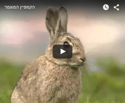 גלייד ישראל תומכים במיזם החדש Vegazine