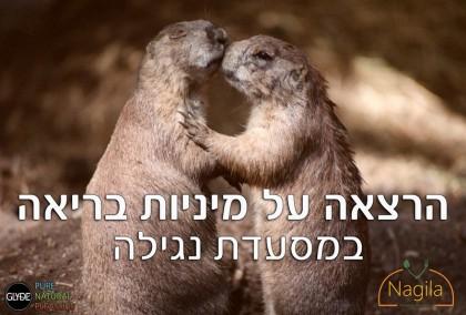 שיחה על הבר עם גלייד ישראל במסעדת נגילה